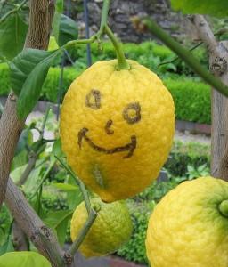 Zitronenbäumchen im Bastionsgarten