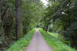 """Deichlandschaft im """"Gartenreich Dessau-Wörlitz"""""""