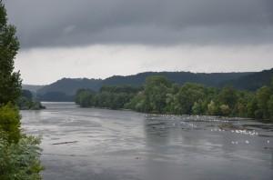 Schwäne auf der Dordogne