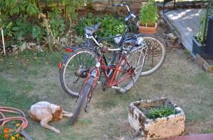 Madames Hund bewacht unsere Fahrräder