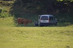 Bauer mit Kuh und Kalb