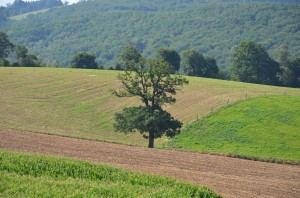 Baum in Feldern