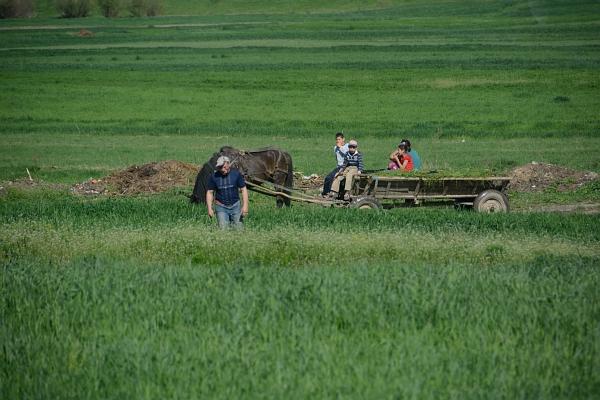 Rumänien: Pferdefuhrwerk