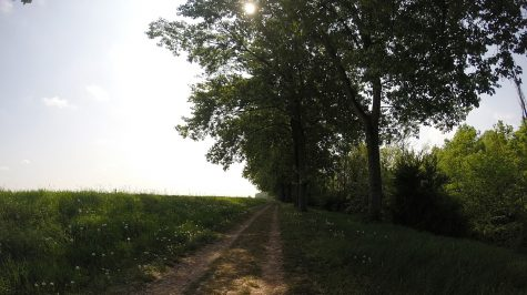 Radweg in den Auen des Po